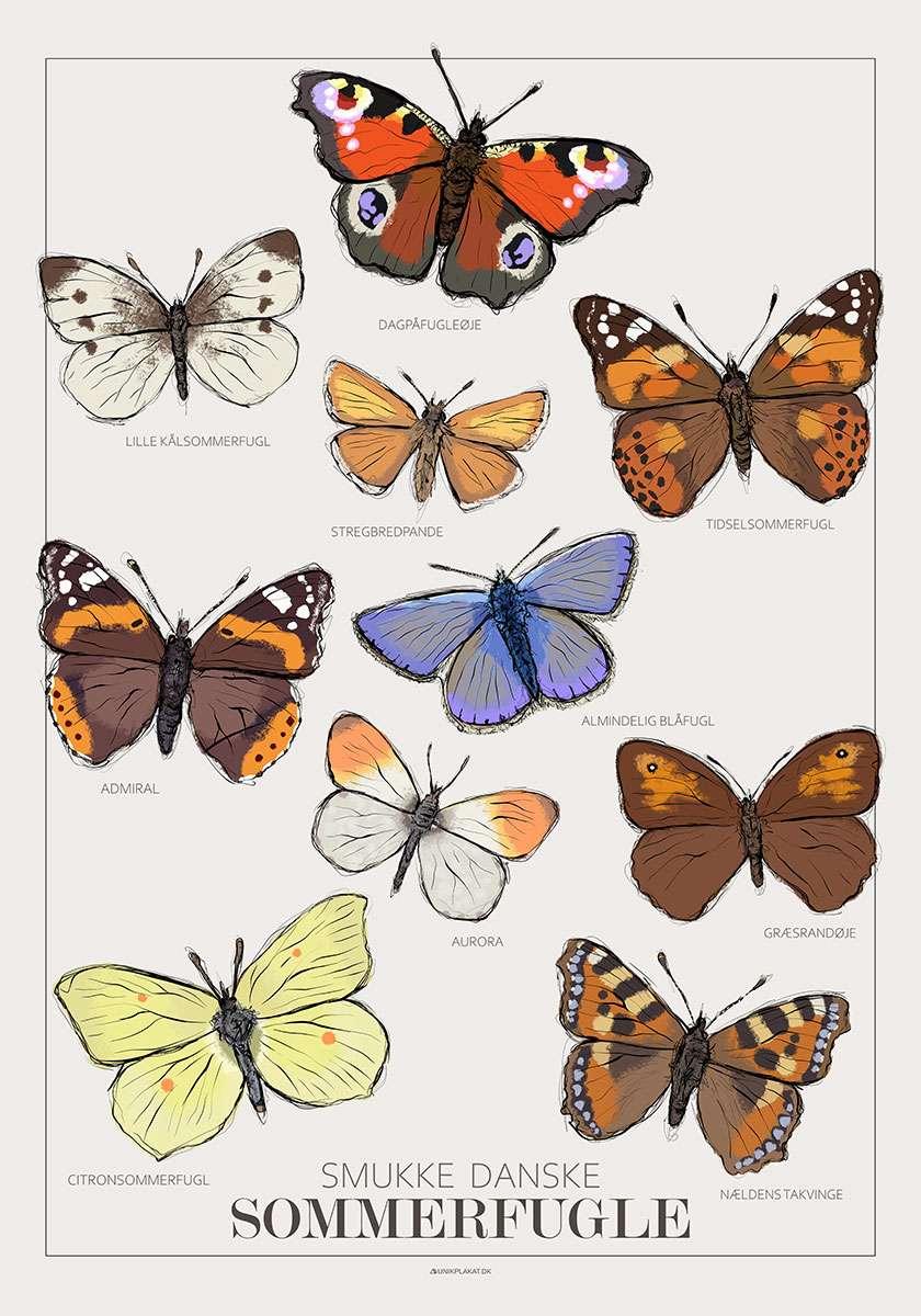 Plakat med sommerfugle
